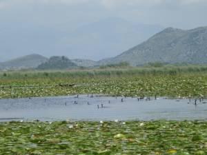 SKADAR LAKE 2