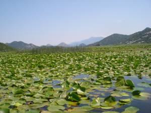 SKADAR LAKE 3