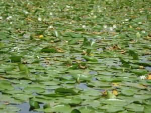 SKADAR LAKE 1